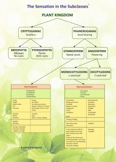 plant-chart